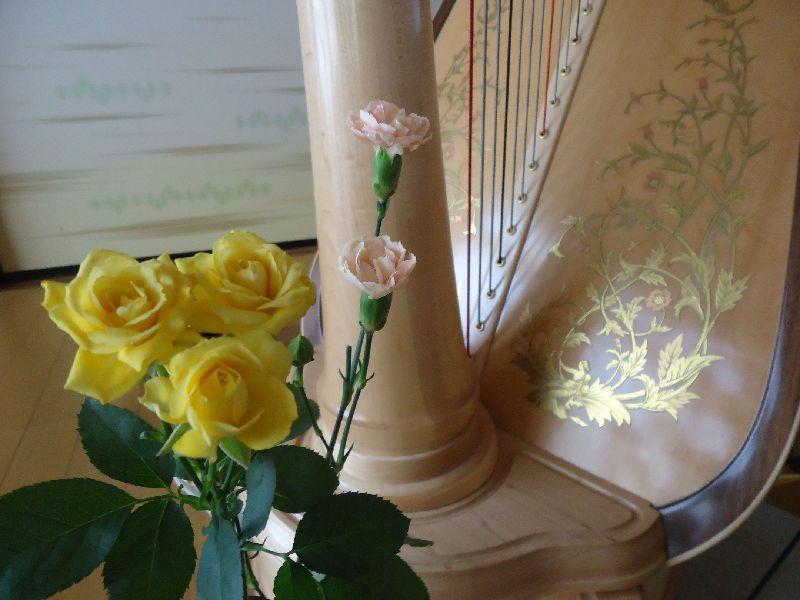 satoko harp artist top (1)
