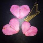 お花のハートとハープ