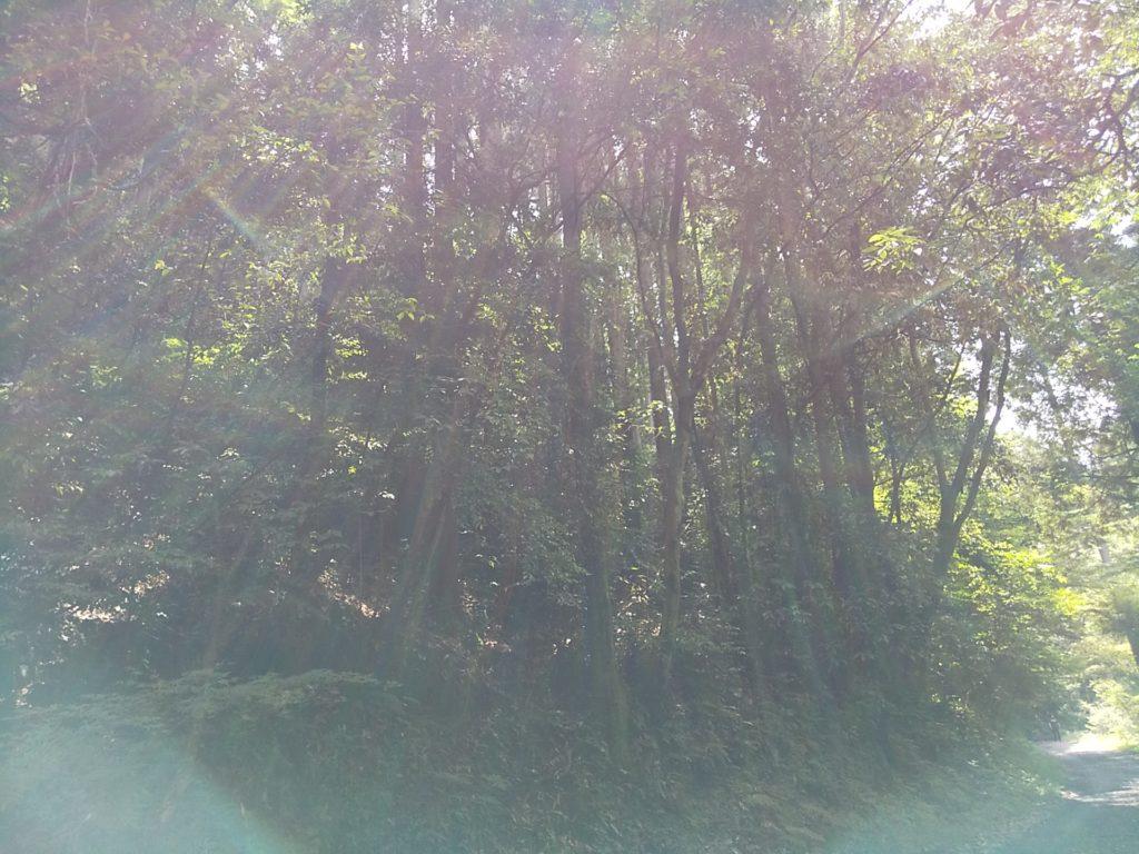 森のひかり