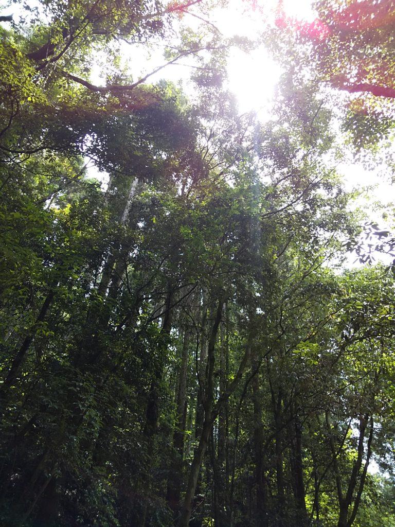 森とお星さま